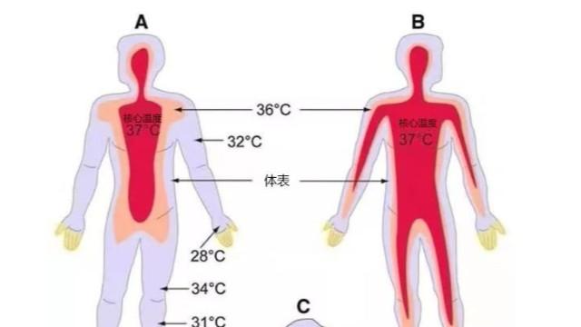 工业红外测温仪-便携式热成像测温仪能用于体温检测吗?